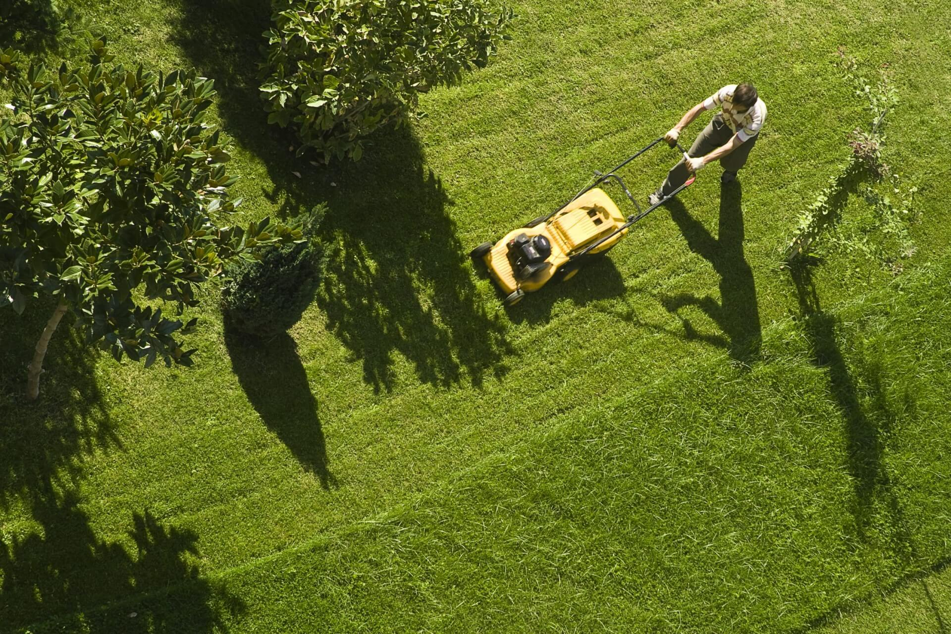 Trawnik w ogrodzie. Jak siać nasiona traw by rosły szybko i zdrowo?